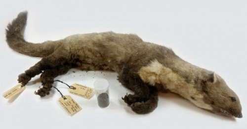 Топ-10: безумные случаи, когда животные причиняли людям огромный ущерб