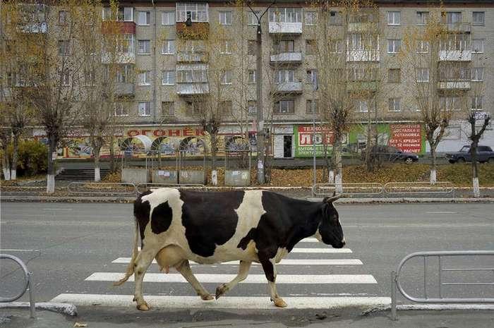 Из России с приветом: нестандартный взгляд на Родину фотографа Александра Петросяна