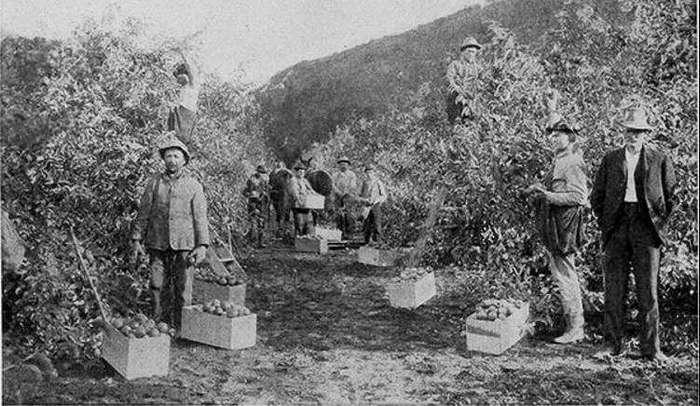 100 лет назад люди ели то, что мы даже не пробовали. Так что же случилось?