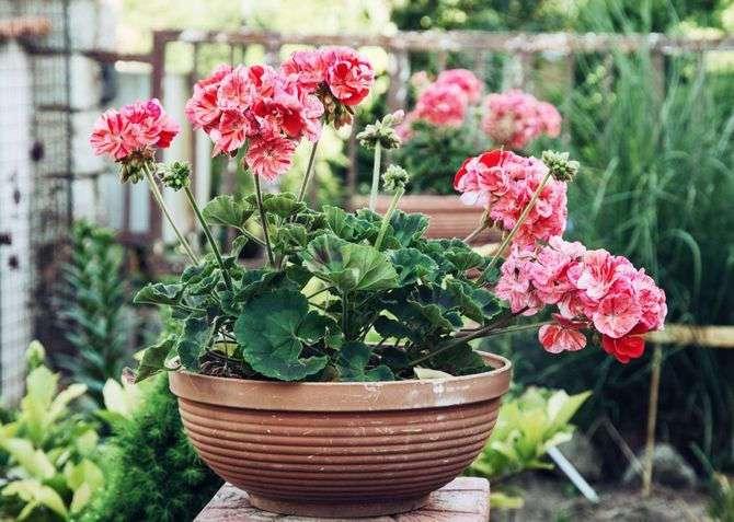 4 растения, которые должны быть в каждой квартире