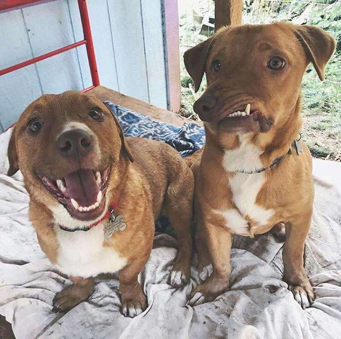 История добродушного пса с отталкивающим внешним дефектом
