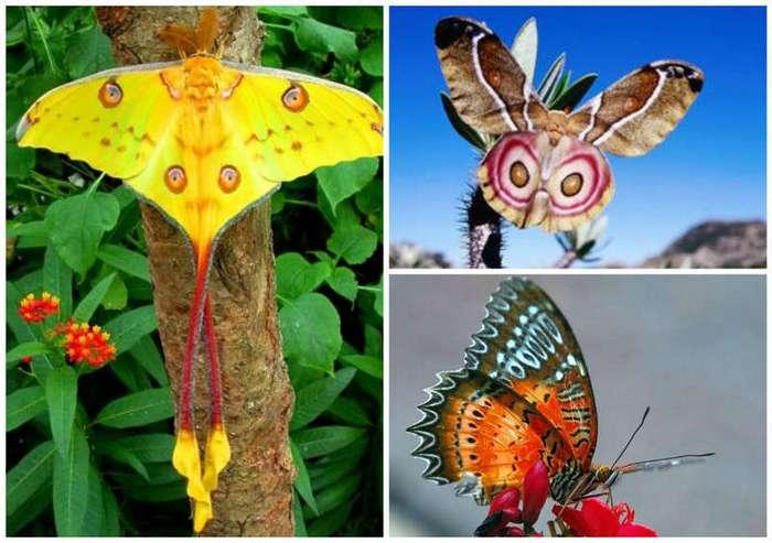 Эти невероятные бабочки