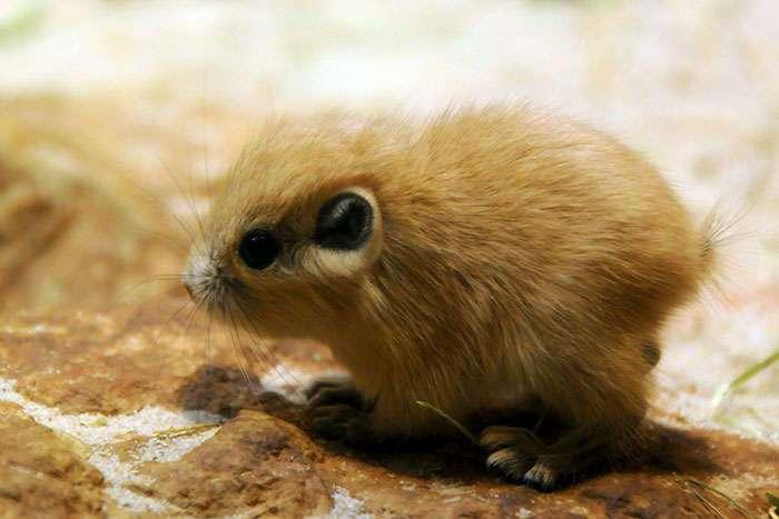 Очаровательные малыши редких видов животных