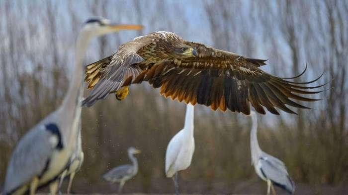Удивительные снимки животных прошлой недели