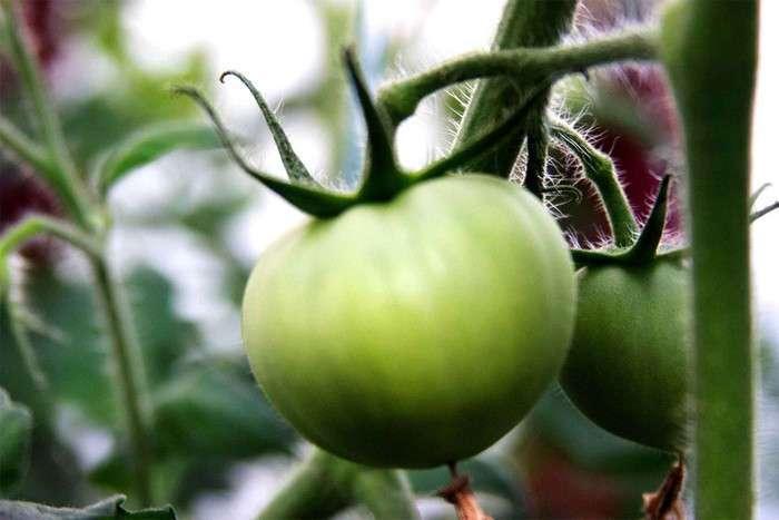 Необычного применение обычного яблока в быту