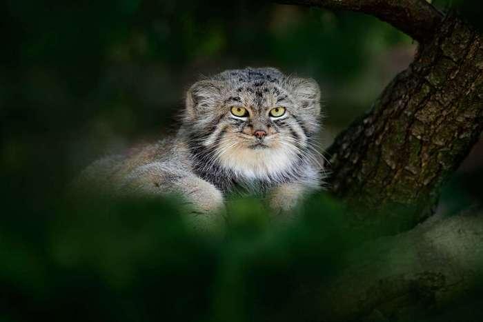 Магический взгляд кошачьих