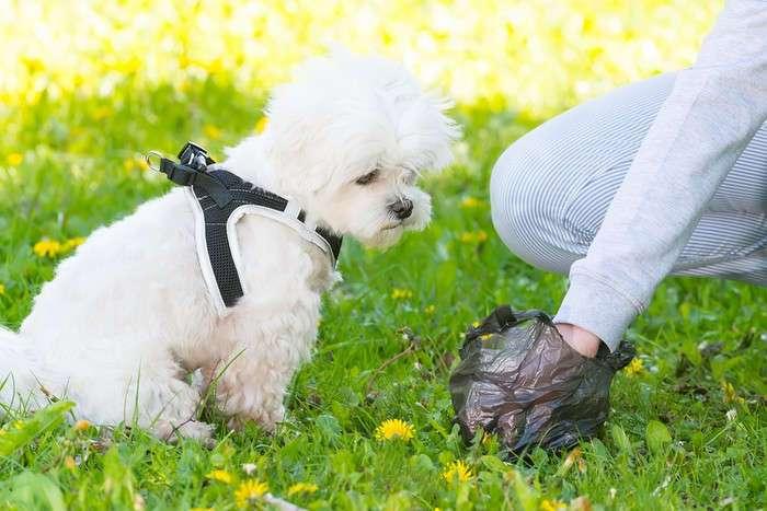 Для дома, огорода и окружающей среды: 10 действительно полезных идей, как повторно использовать полиэтиленовые пакеты