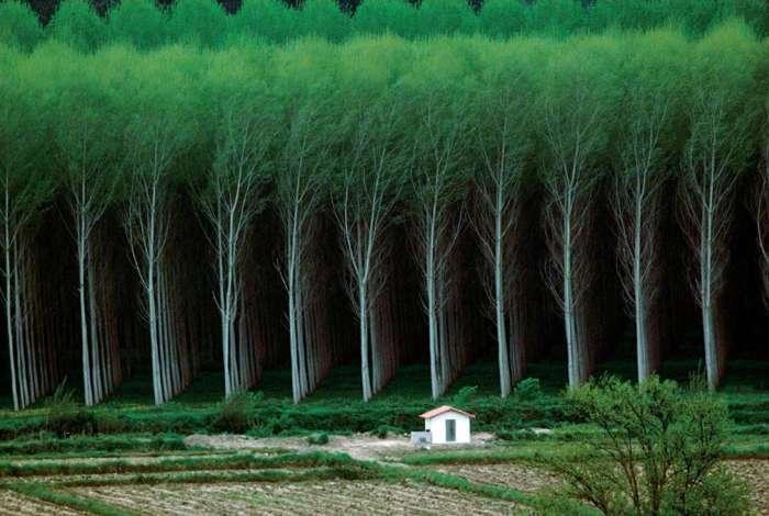 18 завораживающих снимков, доказывающих, что в нашем мире есть место совершенству