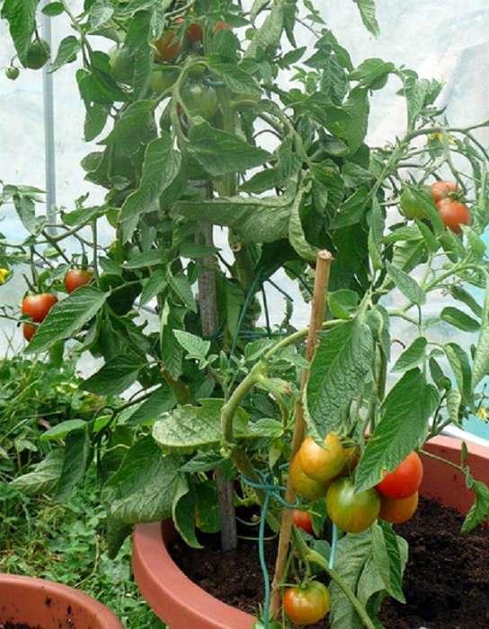 советы для дачников и садоводов