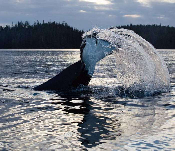 Фотограф запечатлел жизнь парня, который живет на одном из островов Аляски среди медведей и китов