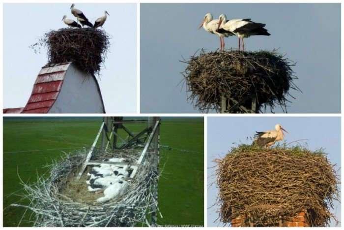 Неимоверное птичье строительство
