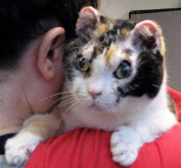Настоящая мать-героиня: кошка пять раз входила в горящее здание, чтобы вынести каждого из своих котят