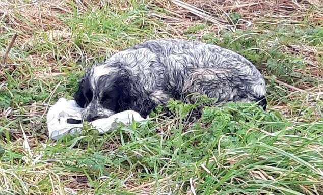Он нашел брошенную собаку с пакетом в зубах...