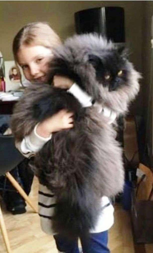 Девочка приютила маленького больного котёнка. Через год её ждал большой сюрприз!
