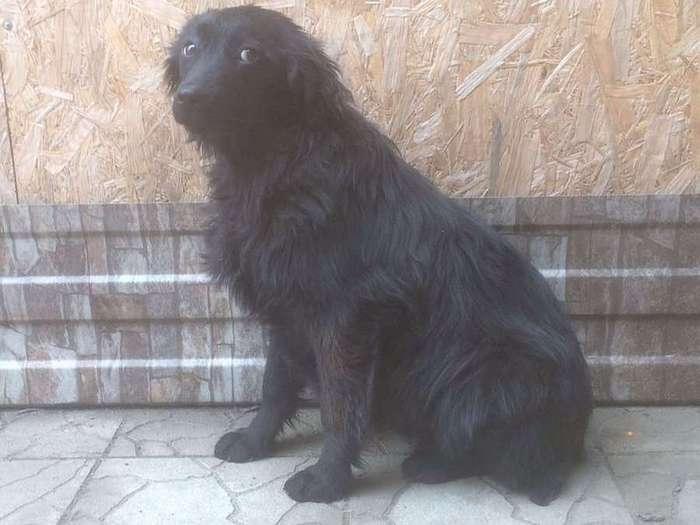 На Кубани парни спасли собаку с необитаемого острова (4 фото)