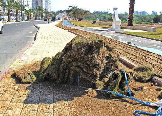 Как устроено капельное орошение в Израиле
