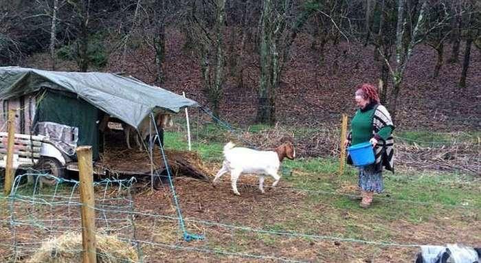 Пару, сбежавшую в лес от арендного жилья, выселяют оттуда