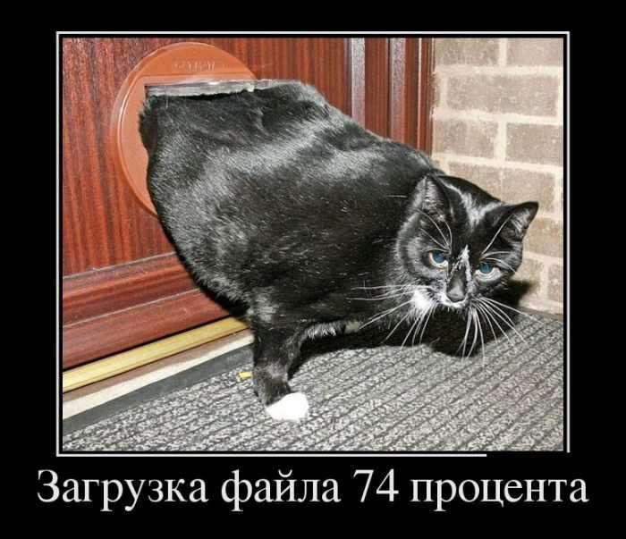 ТЕПЕРЬ Я ВИДЕЛ ВСЁ !