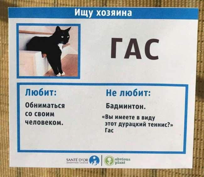 Приют для кошек придумал необычное решение, чтобы помочь животным найти хозяина.
