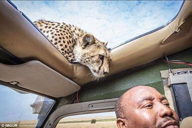 Вы подошли слишком близко: забавные встречи любознательных животных с туристами