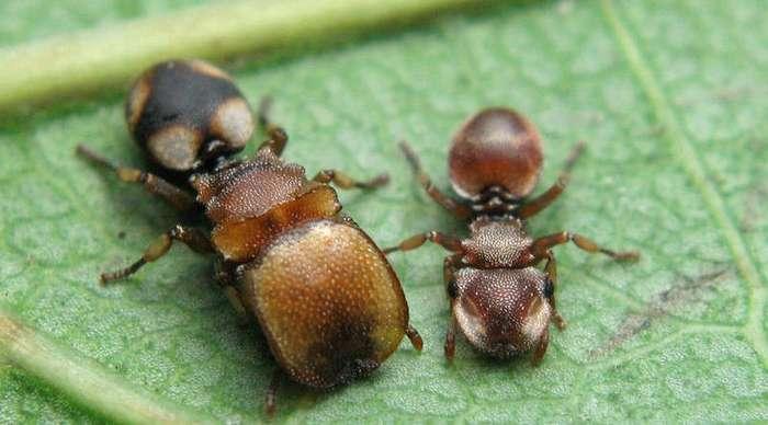 Странные муравьи