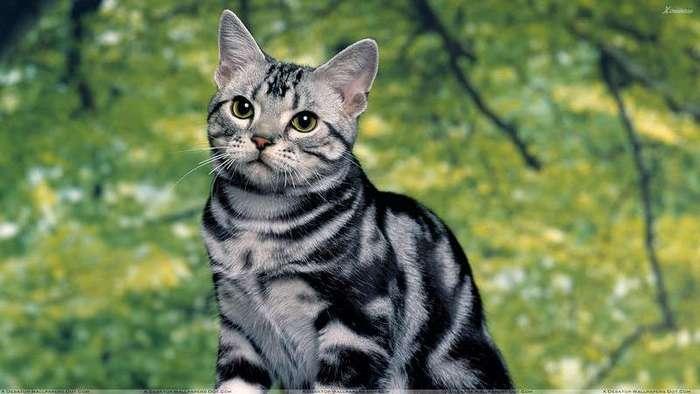 А вы знаете для чего кошкам эти -кармашки- на ушах?