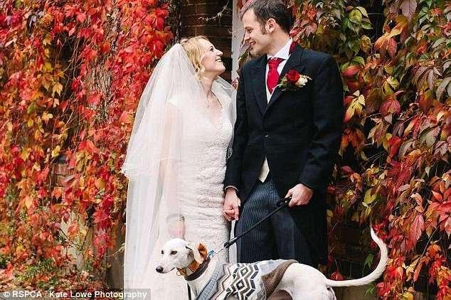 Самый истощенный в мире пес отъелся и стал свидетелем на свадьбе!