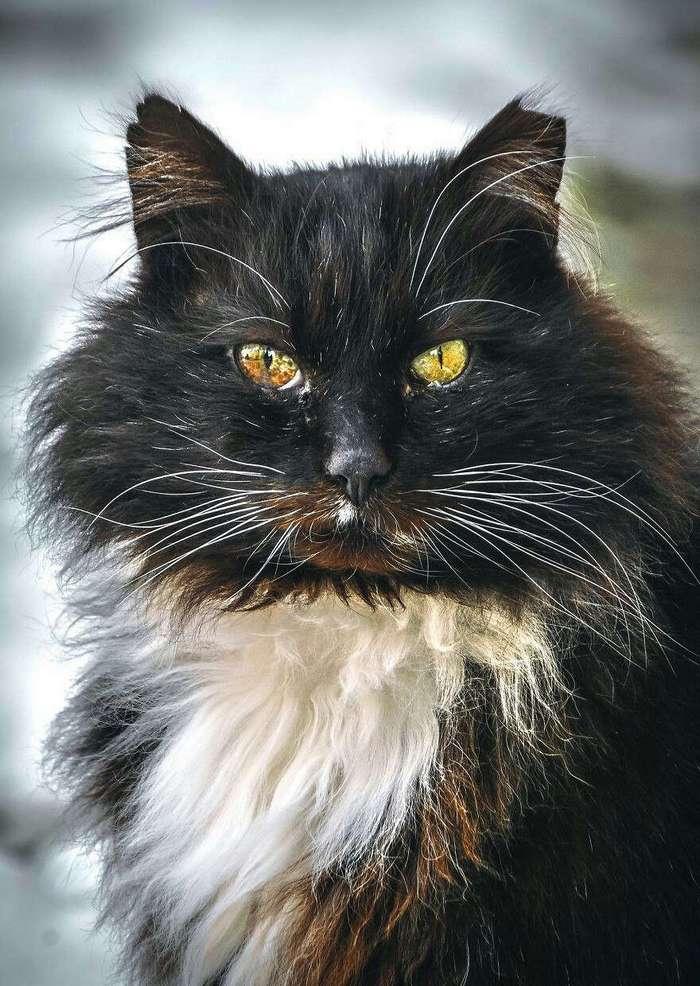 Портреты бродячих кошек. Эти глаза говорят о многом.