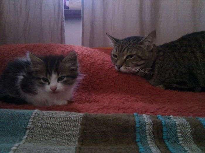 """""""Мой кот Карл взял под свою опеку маленького напуганного Фреда, которого мы спасли с улицы""""."""