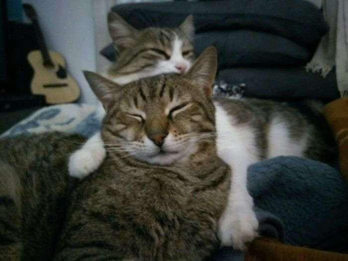 -Мой кот Карл взял под свою опеку маленького напуганного Фреда, которого мы спасли с улицы-.