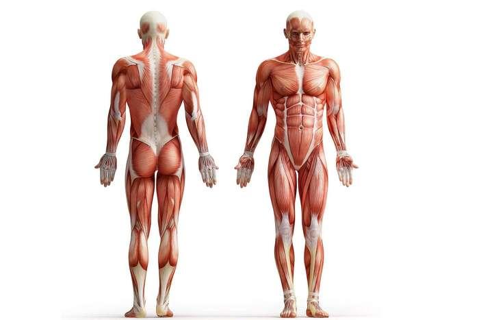 Главные загадки человеческого тела