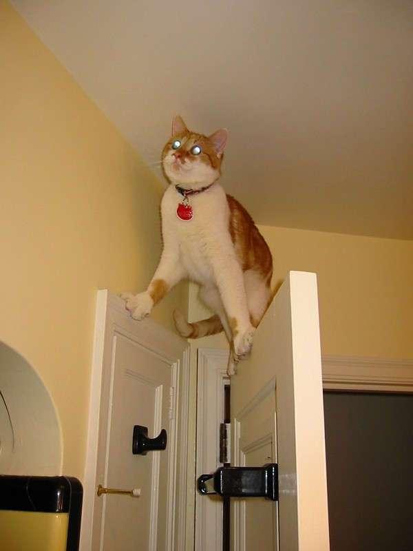 Коты попавшие в непростую жизненную ситуацию