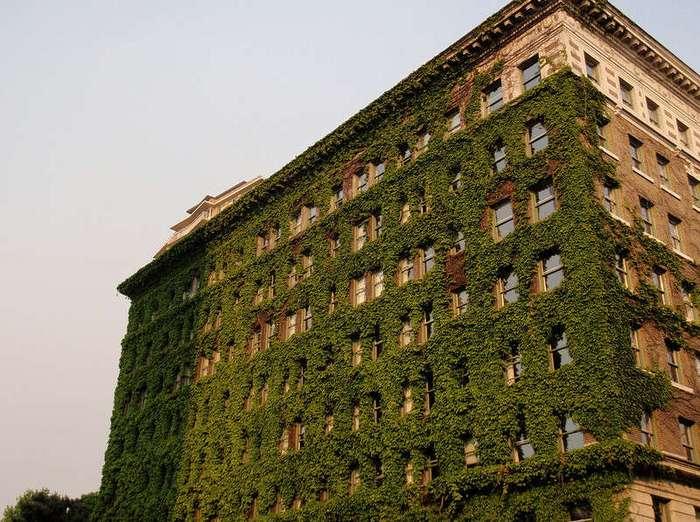 Утопающие в зелени: здания и сооружения, которые полностью слились с природой