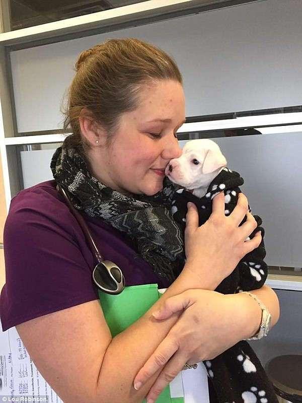 Борьба за жизнь: история щенка без передних лап
