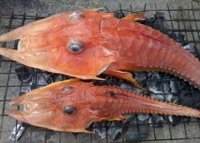 Странное существо было найдено у берегов Австралии