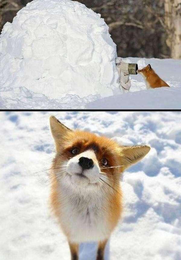 Новая и интересная подборка забавных фотографий животных