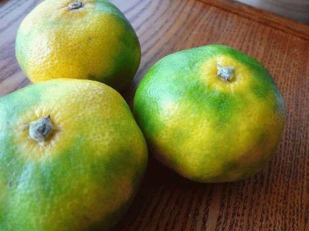 Медики предупредили о смертельной опасности популярного фрукта