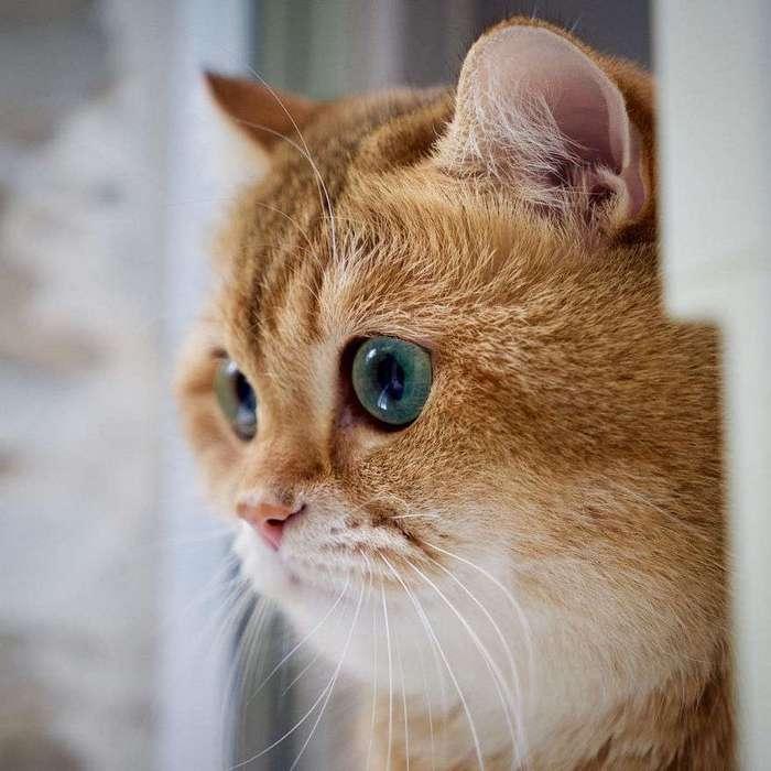 Зелёные глаза, которые украдут ваше сердце.