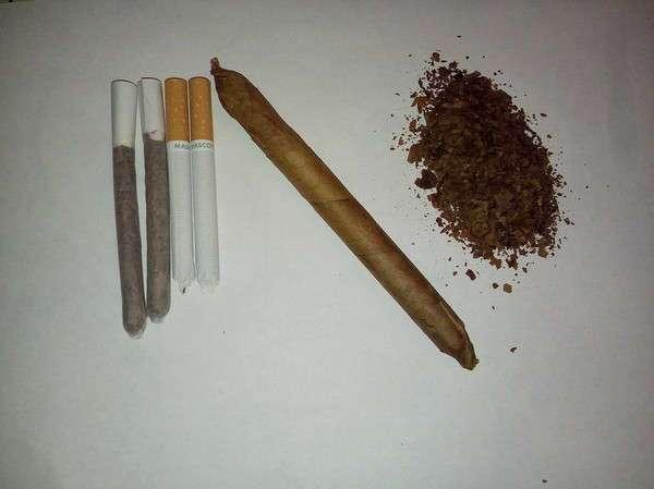 Первая сигара комом, или свой табак в Ленинградской области