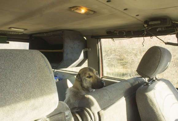 Спасение собаки в горах зимней Грузии