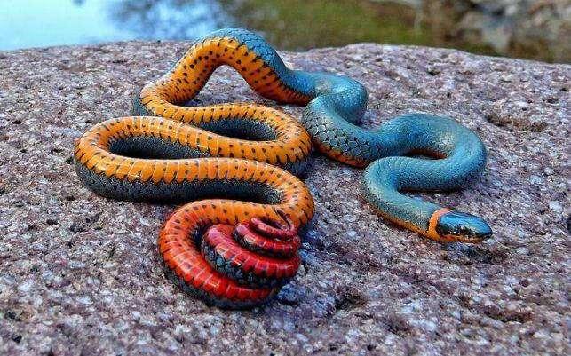 Удивительные животные с необычной окраской