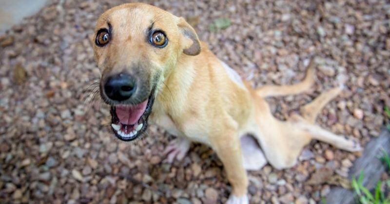 Парализованная собака из последних сил приползла к людям за помощью