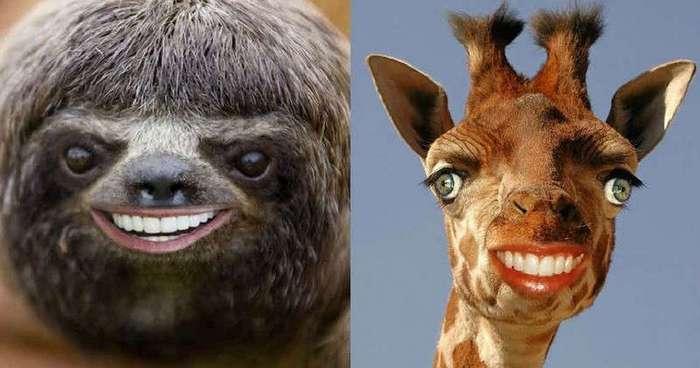 Что фотошоперы натворили с этими несчастными животными?