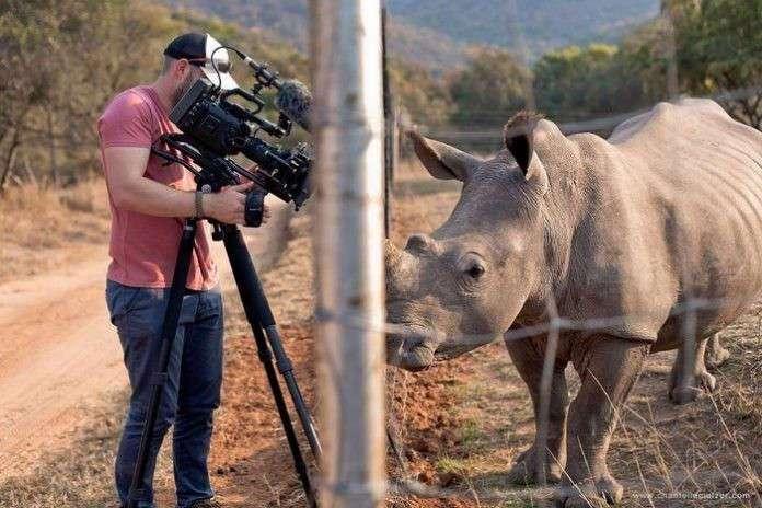 Дикий носорог подошёл к оператору и потребовал погладить ему брюшко