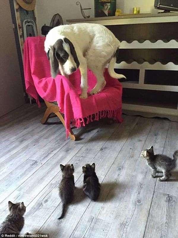 Животные удивляются