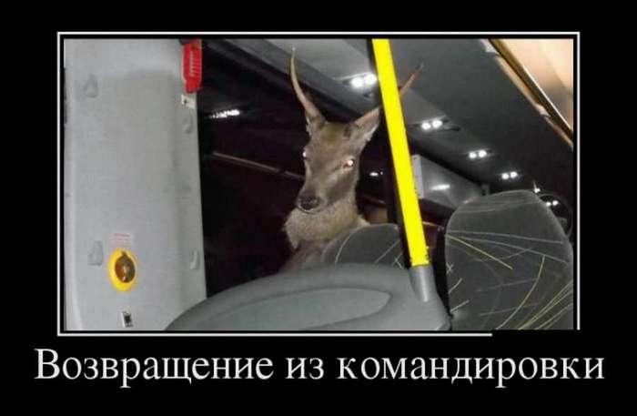 ВЕСЕЛЫЕ КАРТИНКИ ДЛЯ НАСТРОЕНИЯ )))