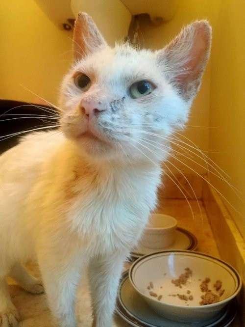Кот, которого подобрали на улице, удивил своими необычными глазами