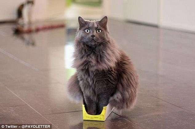 Кошки и коробки: им нельзя друг без друга!