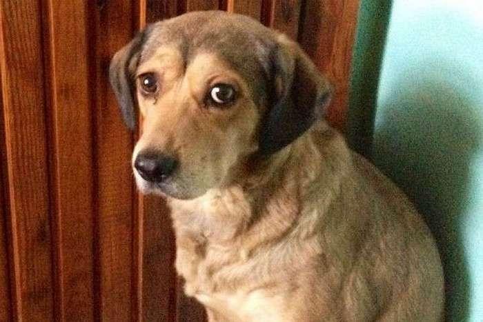Осиротевшая собака три дня просидела у тела хозяина в Красноярске
