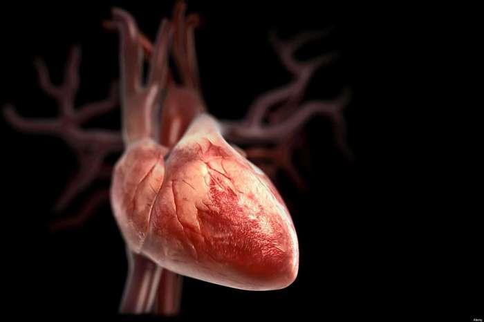 Ученые выяснили, что едят люди, у которых самое здоровое сердце